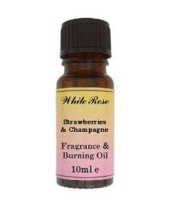 Strawberries & Champagne (Paraben Free)  Fragrance Oil
